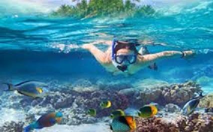 魚のように水中で呼吸がもうすぐ可能に!